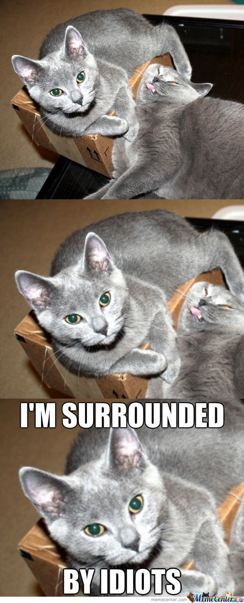 Two Cats And A Box [2]