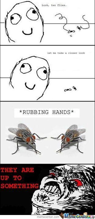 Two Flies ,why Always Do This Lol