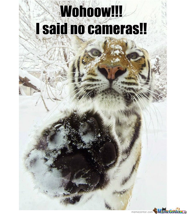 Unphotogenic Tiger