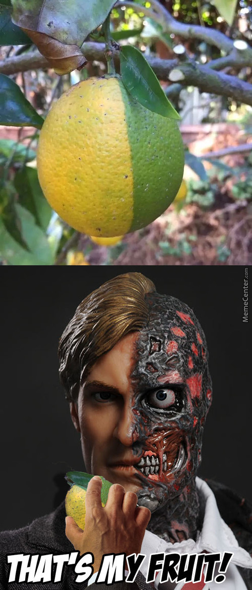 Unprecedented Fruit