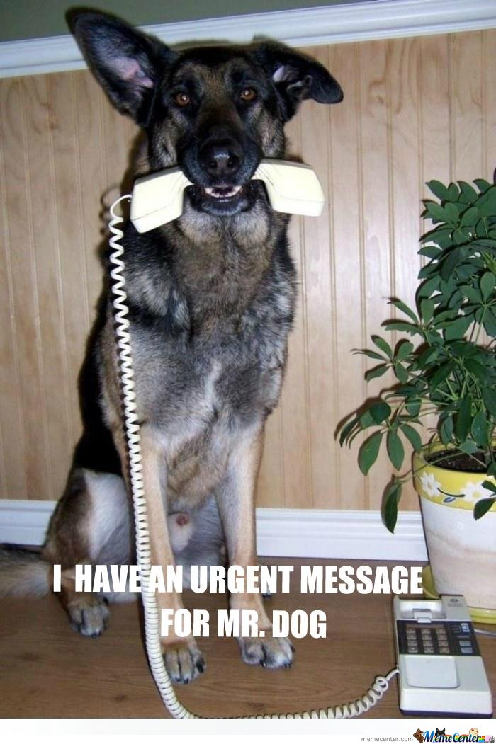 urgent message for Mr. Dog