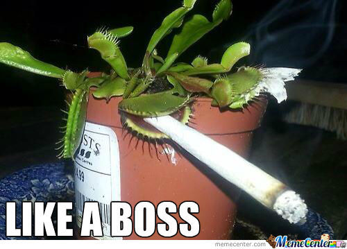 Venus Flytrap Like A Boss