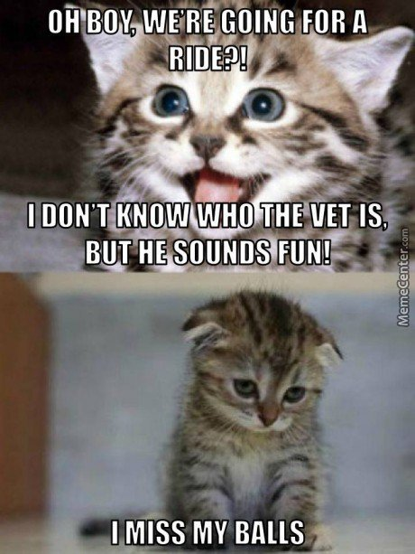 Vet Is Fun :d