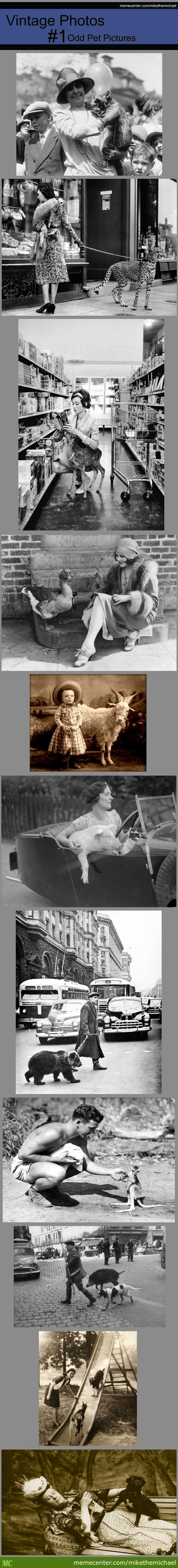 Vintage Photos #1- Odd Pet Pictures