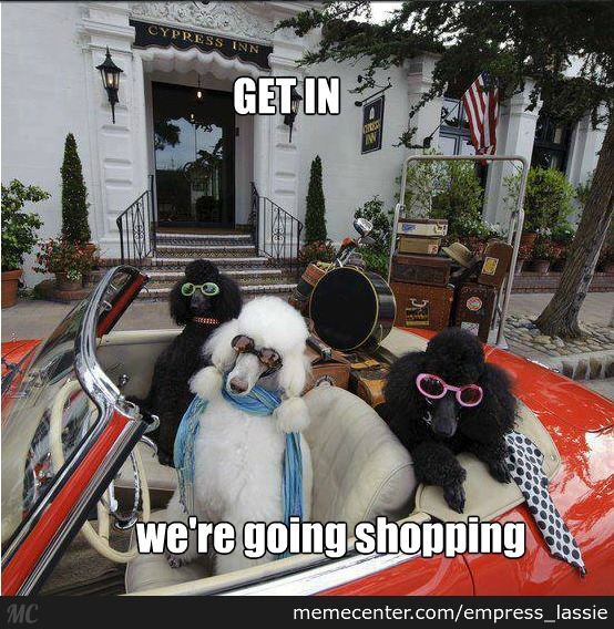 We're Going Shopping