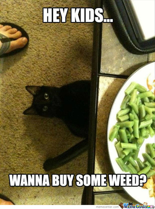 Weed Cat...
