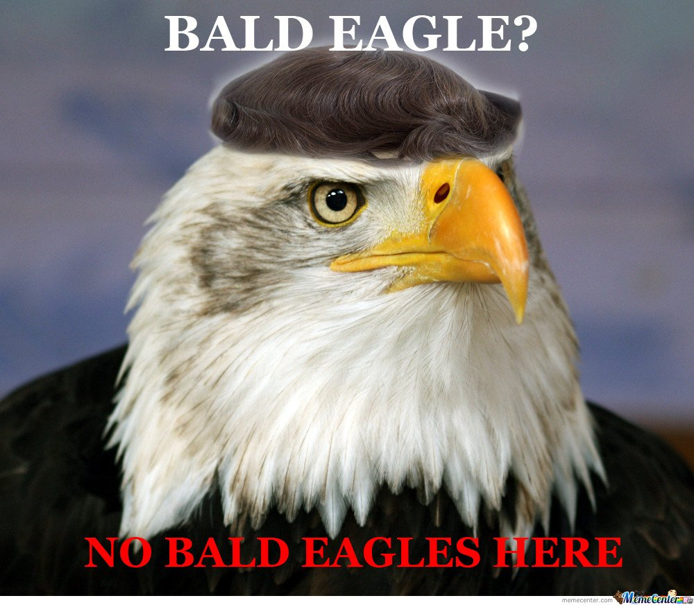 What bald eagle?