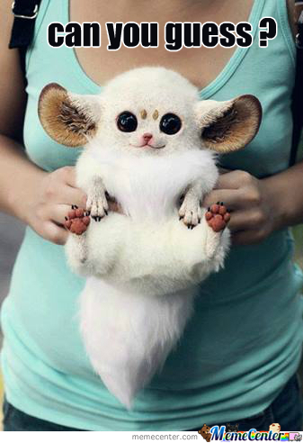 What Kind Of Cute Creature Is This ? (Without Google)
