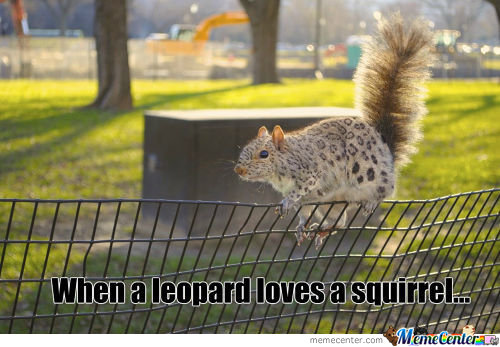 When A Leopard Loves A Squirrel