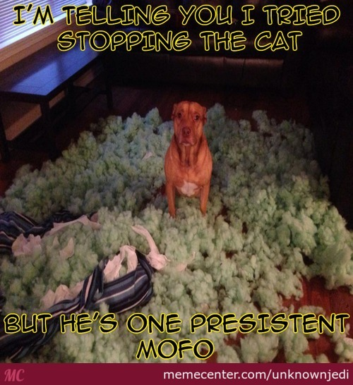 When All Else Fails...blame The Cat