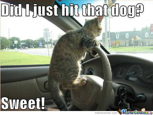 When Cats Drive