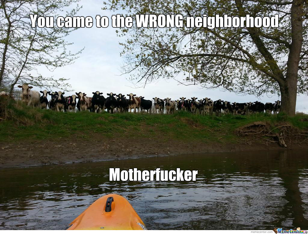 When Cows Attack