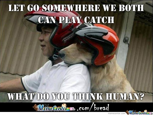 When Dogs Ride