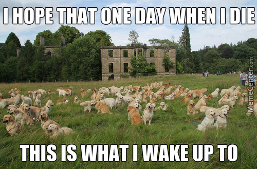 When I Die I Hope To Wake Up In A Field Full Of Puppies