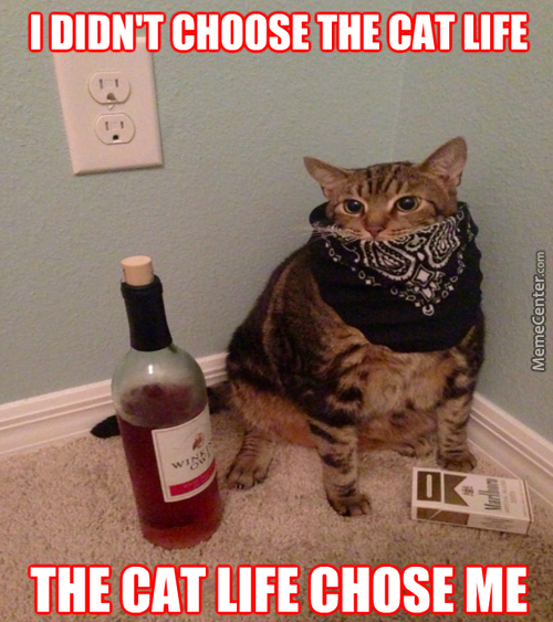 When Your Cat Is More Thug Than You