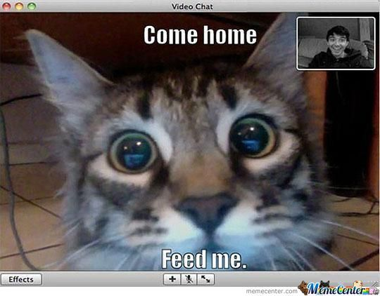When You're Cat Videochat You