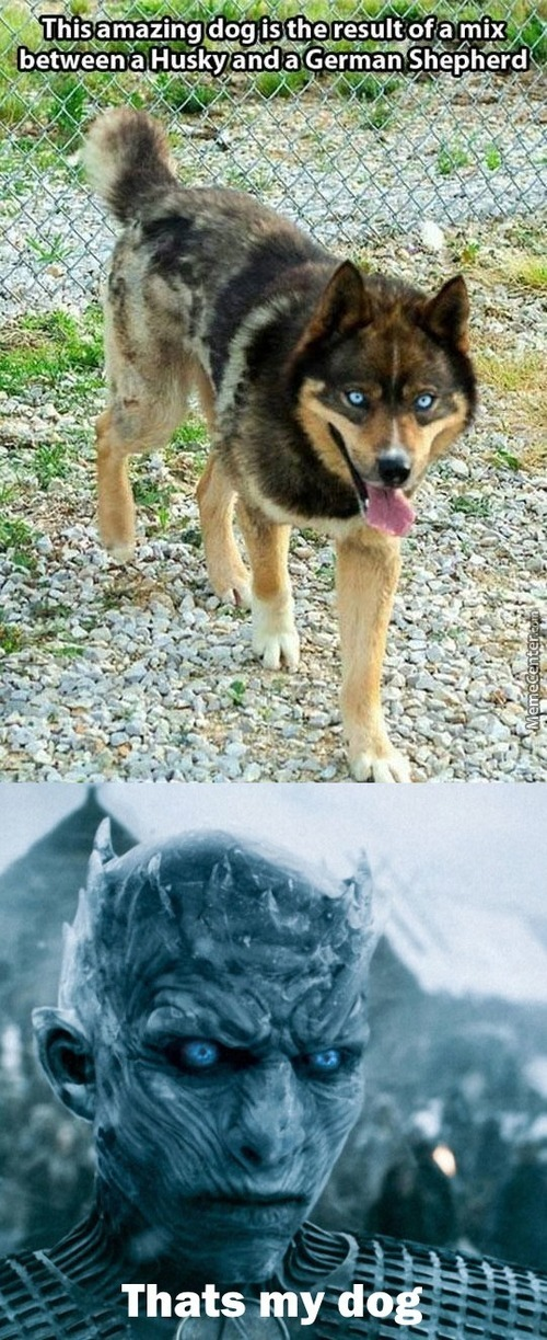 White Walker Approves This Dog Breed