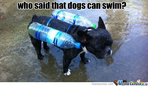 Who Said That Dogs Can Swim?