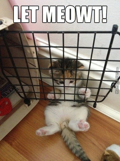 Why Are You In Prison? Too Cute Maybe ^-^
