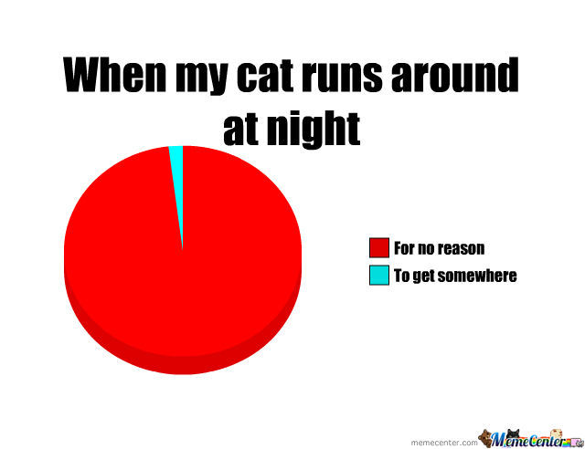 Why My Cat Runs Around