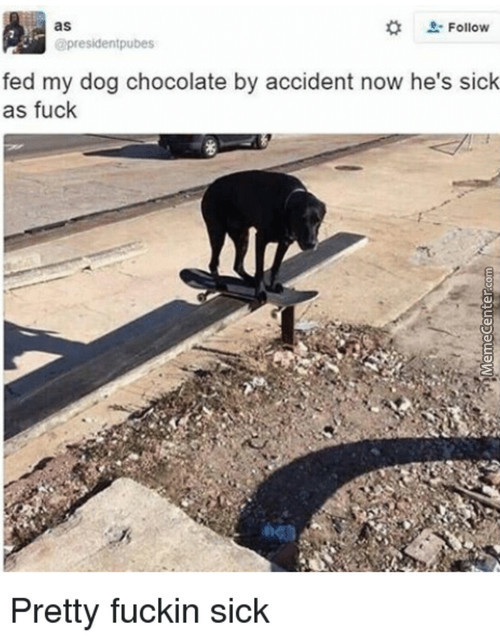 Why You Can't Feed Your Dog Chocolate