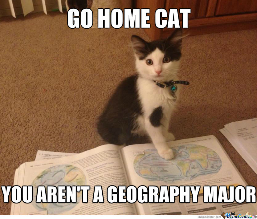 Worldly Kitten