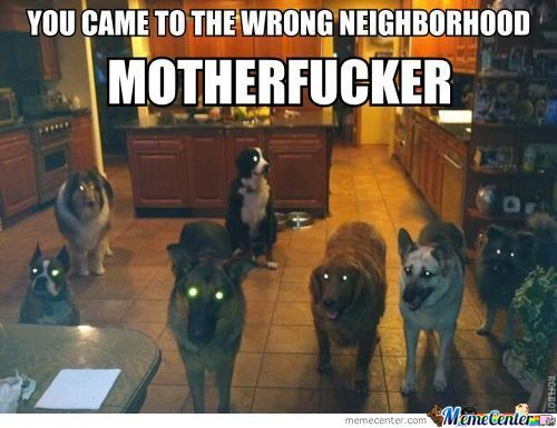 Wrong Neighborhood Dogs