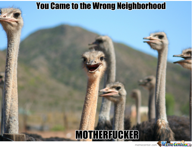 Wrong Neighborhood ( Ostrich Edition ) by picyu91 - Meme ...