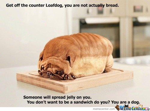 you are not a bread