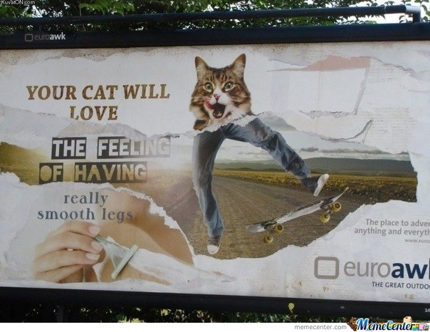 Your Cat Will Like It
