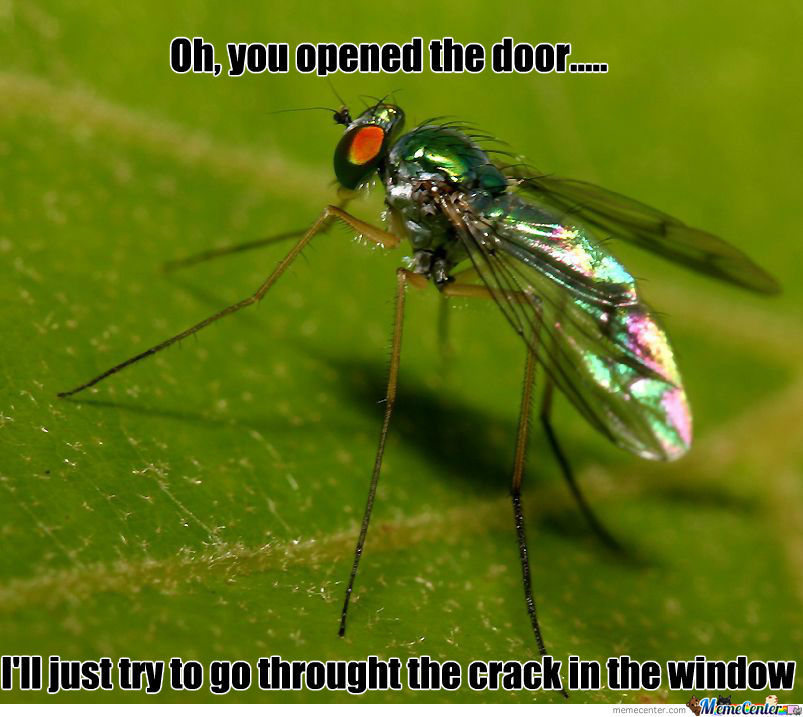 You're A Fly, You Should Feel Bad