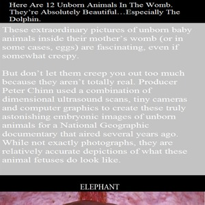 animals in the womb documentary