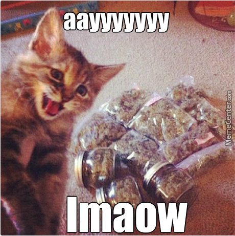 420 Is Next Month Kitty By Brisa Meme Center
