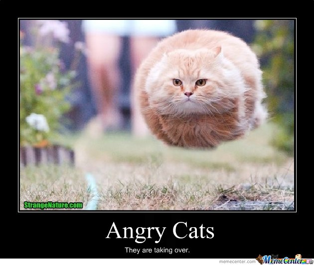 Image result for angry cats meme