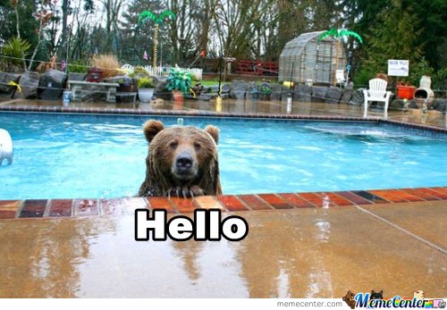 Bear in pool by jsceb meme center for Bears in swimming pool new jersey