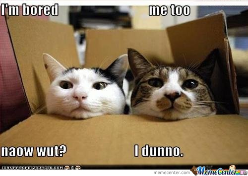 Image result for bored cat meme