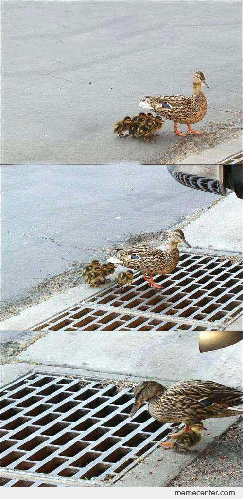 Ducks fall in to loophole