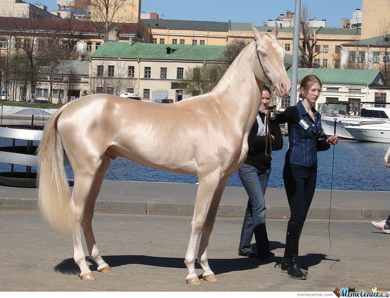 Epic Horse is Epic