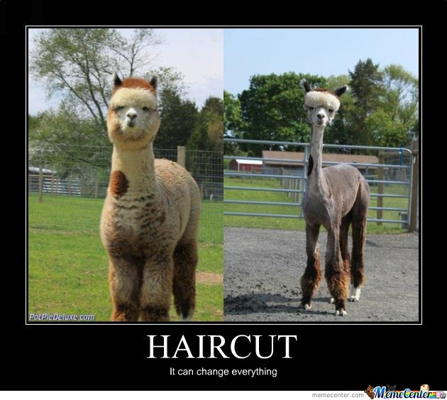 Haircut By Adysone Meme Center