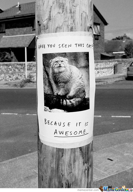 Have You Seen This Cat? Because It's Awesome