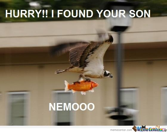 Hurry! I found your son Nemo