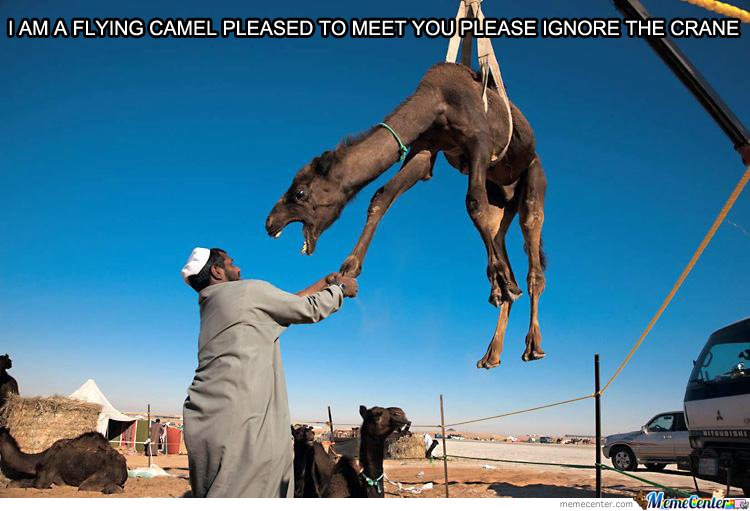 I'm A Flying Camel