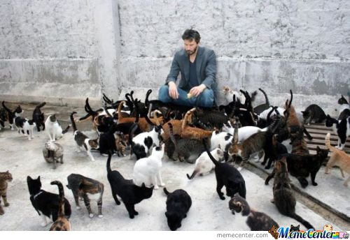 Keanu With Cats