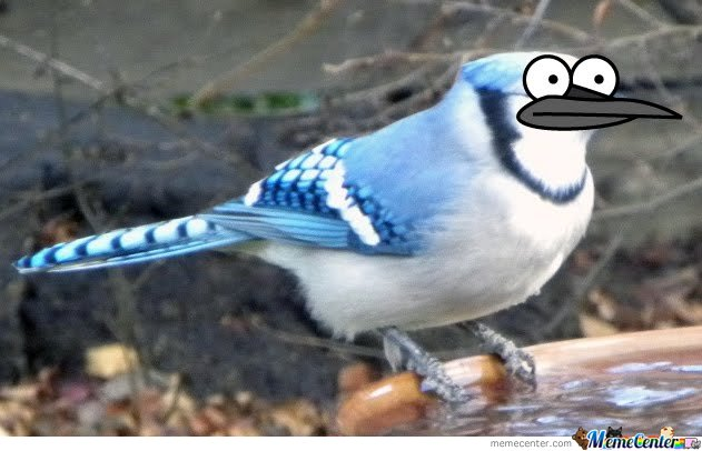 Le awesomely drawn bird