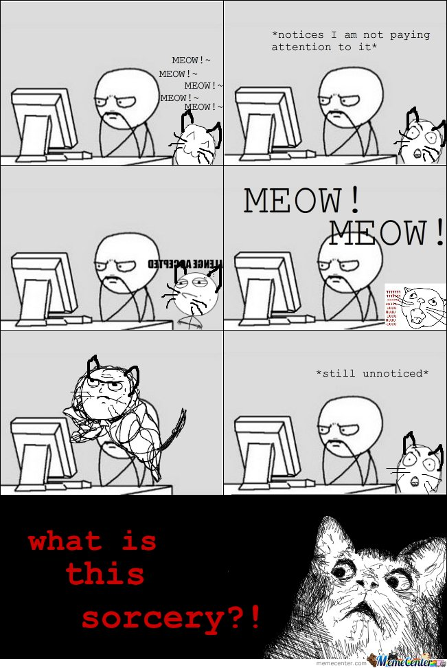 Meow Meow! Notices I Am Not Paying Attention To It!