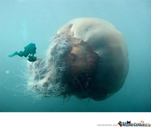 Mother of Jellyfish