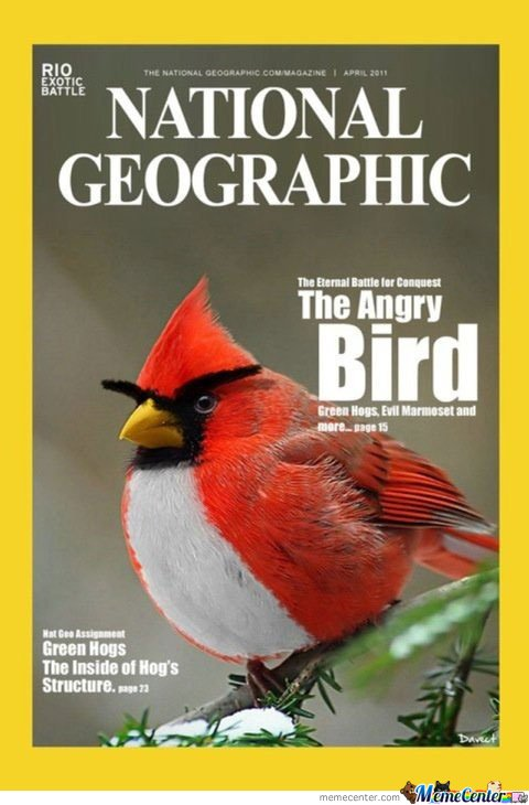 National Geographic The Angry Bird