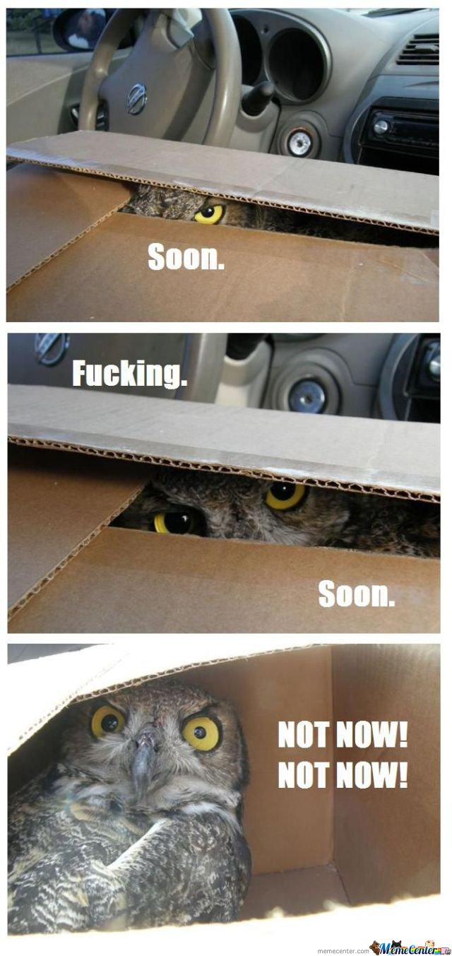 Owl in The Box