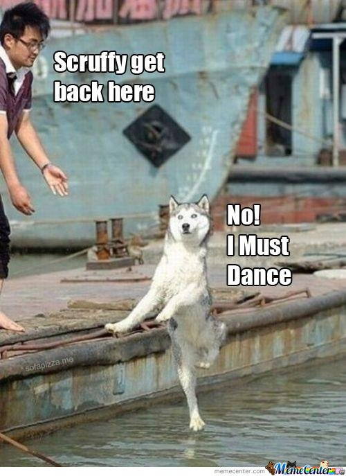 Scruffy Get Back Here! No, I Must Dance