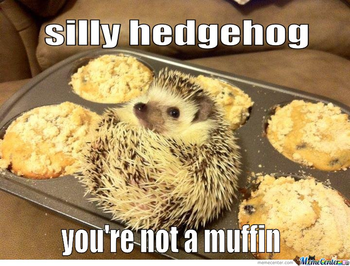 Silly Hedgehog You're Not A Muffin
